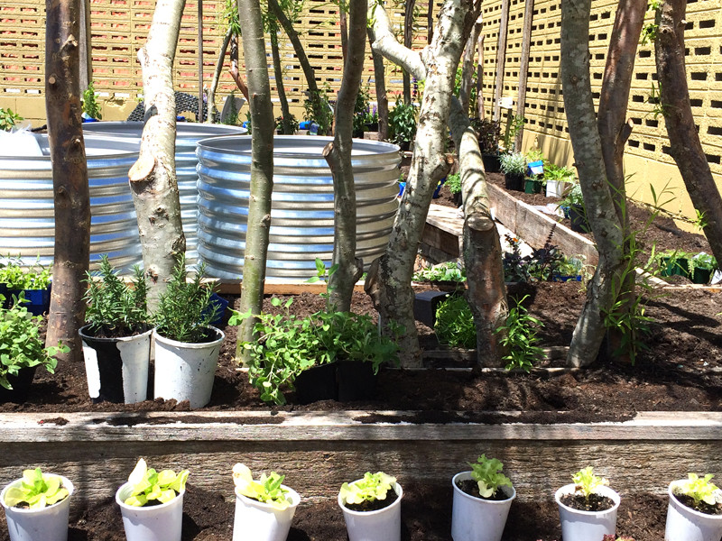 Picture by Ilaria Vanni - Milkwood Permaculture, 107 Projects rooftop garden