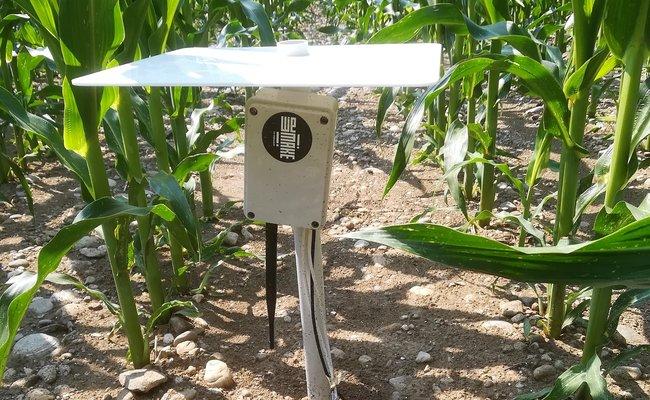 Sensore di WeMake nel campo di Crea